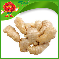 Chinese fresh ginger for sale ginger with cheap price and high quality