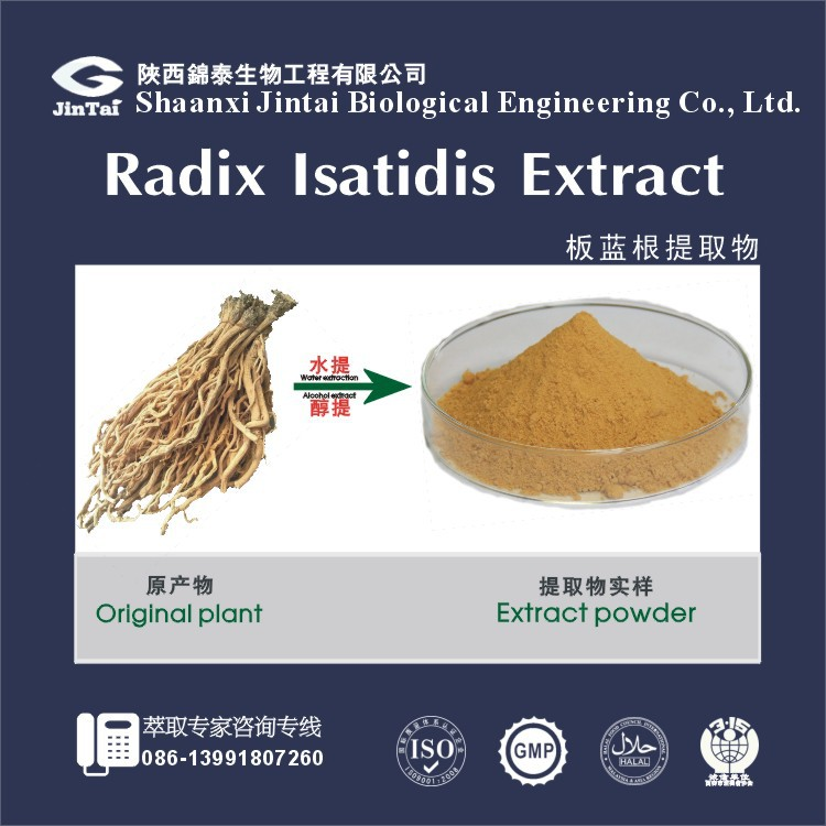Natural Herb 5:1 10:1 Radix Isatidis Extract Powder