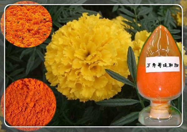 Marigold Oleoresin(Lutein) for Food Additives