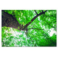 1 Piece HD Forest Green Tree Canvas Painting Nature Landscape Modern Giclee Wall Picture/SJMT1886
