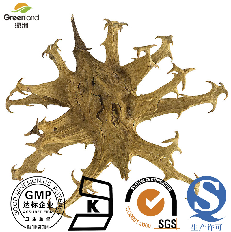 Greenland Factory Supply 100% Natural devil's claw extract Harpagophytum procumbens. 1%-5% Harpagoside HPLC UV