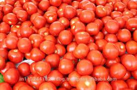 Fresh ketchup Tomato Exporters in India