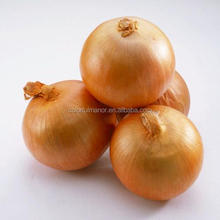 2017 China fresh yellow round onion 60-80 market price for sale