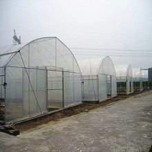 Commercial used steel frame single span greenhouse for sale