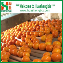 Hot Selling Best Quality Fresh Navel Orange