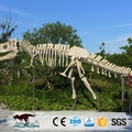 OA23633 Amazing Realistic Artificial Huge Real Dinosaur Skull For Sale