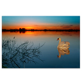 1 Panel HD Printed Sunset Lake Scenery Canvas Wall Painting Swan Photo Wall Painting for Living Room Free Shipping/SJMT1924