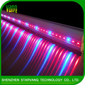 75W interlighting led grow lamp for green houses hydroponic system hybrid tomato seeds