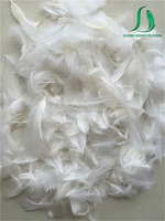 Wholesale white cute goose feather for sofa pillow filler