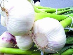 organic normal pure white fresh garlic price