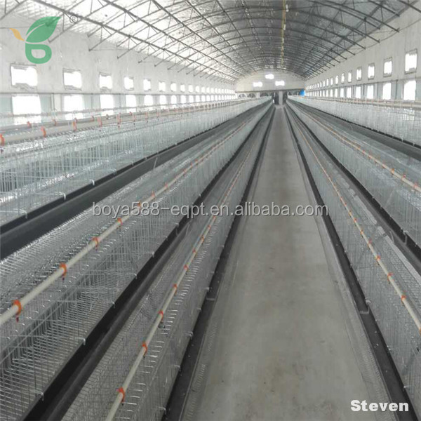 Design laying hen chicken cages and chicken farm equipment for poultry house