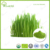 Manufacturer direct supply wheat grass leaf powder