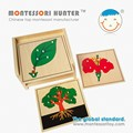 Montessori Botany Puzzle for school materials
