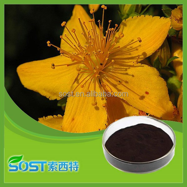 Hot sale and high quality st.john's wort extract with free sample