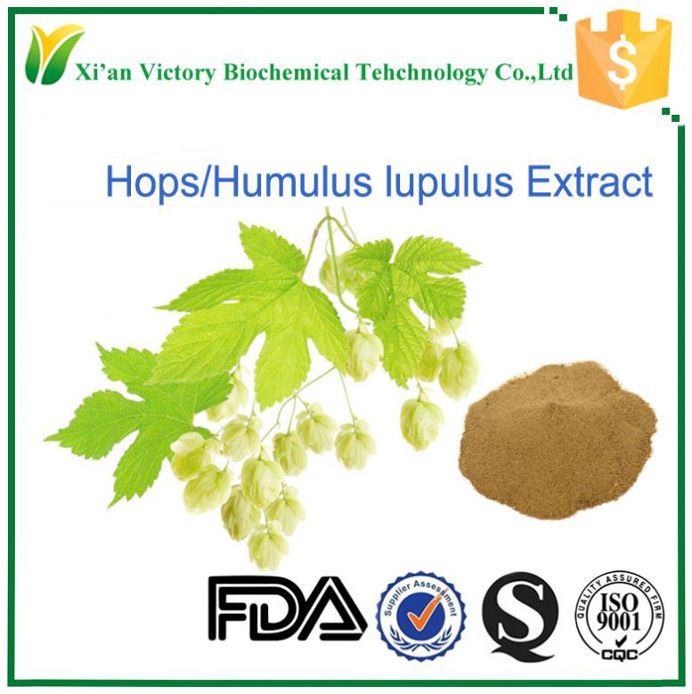 Lupulus plant/Hops Extract Powder Supplier