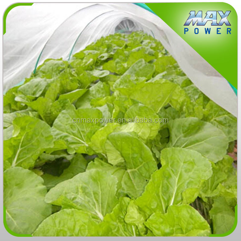 greenhouse vegetable insect repellent device net