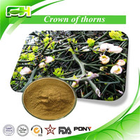 Crown of Thorns Extract/Crown of Thorns Extract Powder