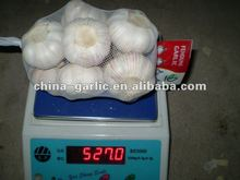 500g Small Packages Red Skin Garlic for Export and Import