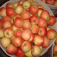 Chinese Fresh Gala Apples Wholesale Price