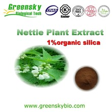 Factory Supply Natural Stinging Nettle Extract