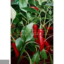 100% Handmade famous still life vegetable and food oil painting on canvas, Corn and Canteloupe, Chili Pepper Plant