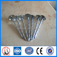 Galvanized umbrella head roofing nails factory price