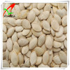 Shine skin pumpkin seeds 8-9cm, 9-10cm, 10up