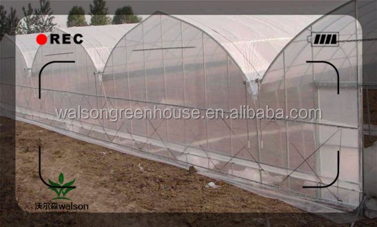 Poly film green house for cucumbe