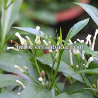100% Natural Product Rauwolfia Serpentina Extract