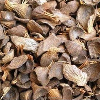 reliable palm kernel shell suppliers from Indonesia
