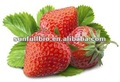 Strawberry Powder Seedless 40mesh