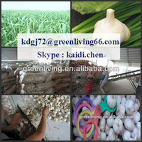 We export new crop 2013 garlic to all the countries