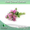 Natural trifolium pratense P.E, red clover extract