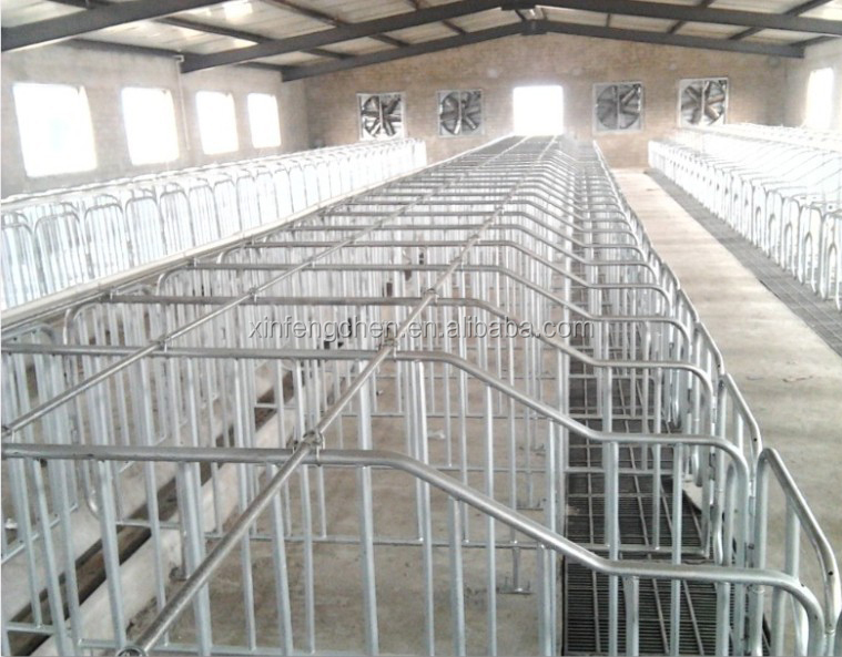 group housing for sows