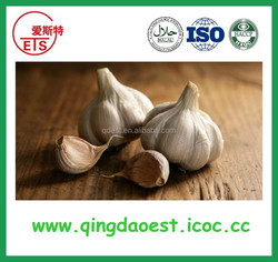 new crop best prices fresh white garlic