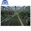 Agricultural Greenhouse For Tomato Vegetable Greenhouse