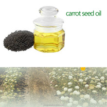 Wholesale Anti-wrinkle Aromatherapy Massage Spa Carrot Seed Essential Oil