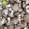 wholesale bulk package chinese frozen mushroom