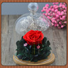 Wholesale Clear Glass Bell Jar Dome