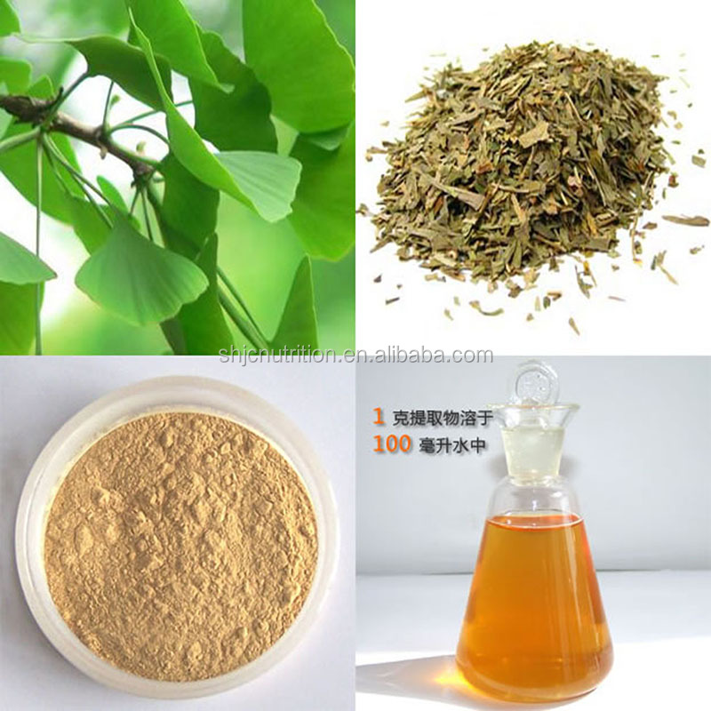 GMP Manufacture supply high quality ginkgo biloba extract, 24.0%Flavones 6.0% lactones,ginkgo biloba