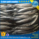 seafrozen pacific saury fish carton packing wholesale