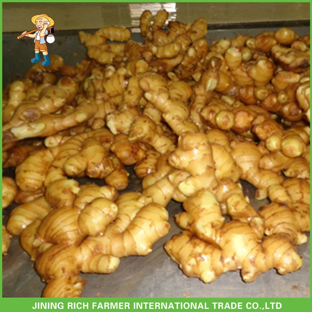 Import China Ginger Fresh Dry Ginger Price