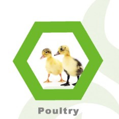 Factory price hot sale chicken cow rabbit sheep goat fish cattle farm home animal poultry feed
