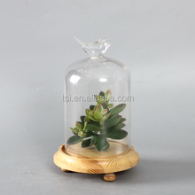 decorative glass dome for plant