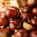 raw chestnut hebei chestnuts for sale