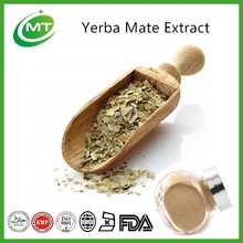 Factory manufacturer free samples pure yerba mate extract powder