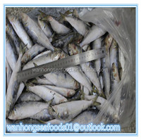 hot sale best grade frozen sardine land frozen
