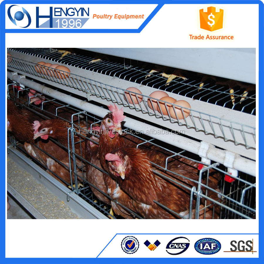 Poultry cage/big egg layer cage/chicken house