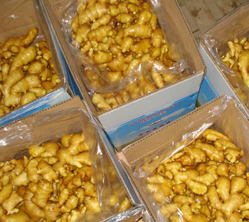 bulk fresh ginger cheapest factory high quality