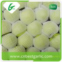 Scientific name of honey green apples fruits